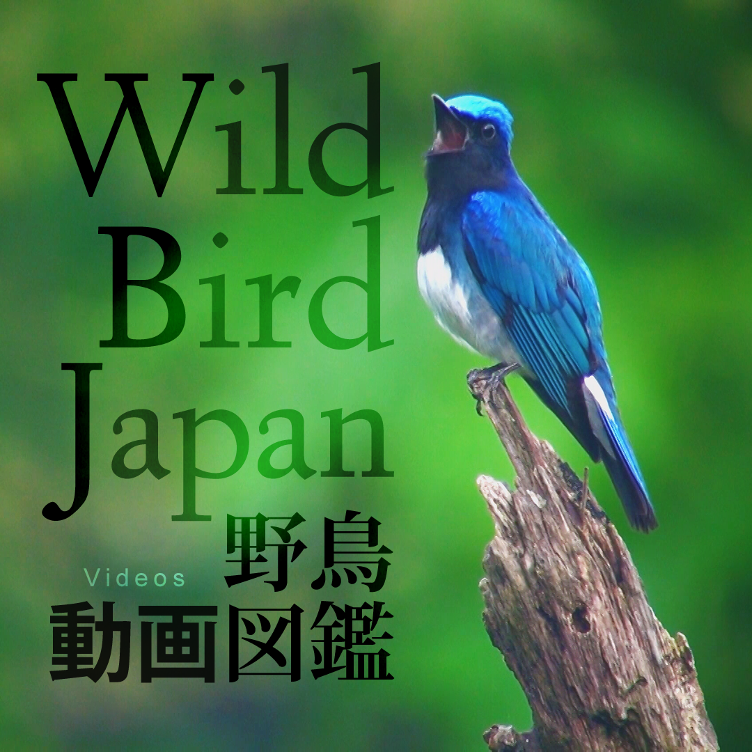 『野鳥動画図鑑』ロゴ