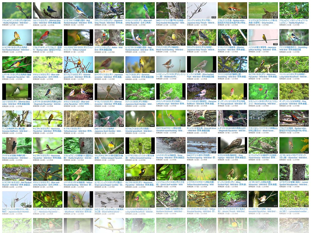 『野鳥動画図鑑』YouTubeチャンネル動画一覧から作成