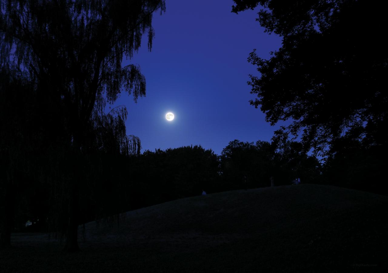 中秋の名月に照らされるくじら山(むさこくらぶ(2016年9月号(vol.112))今月の表紙)