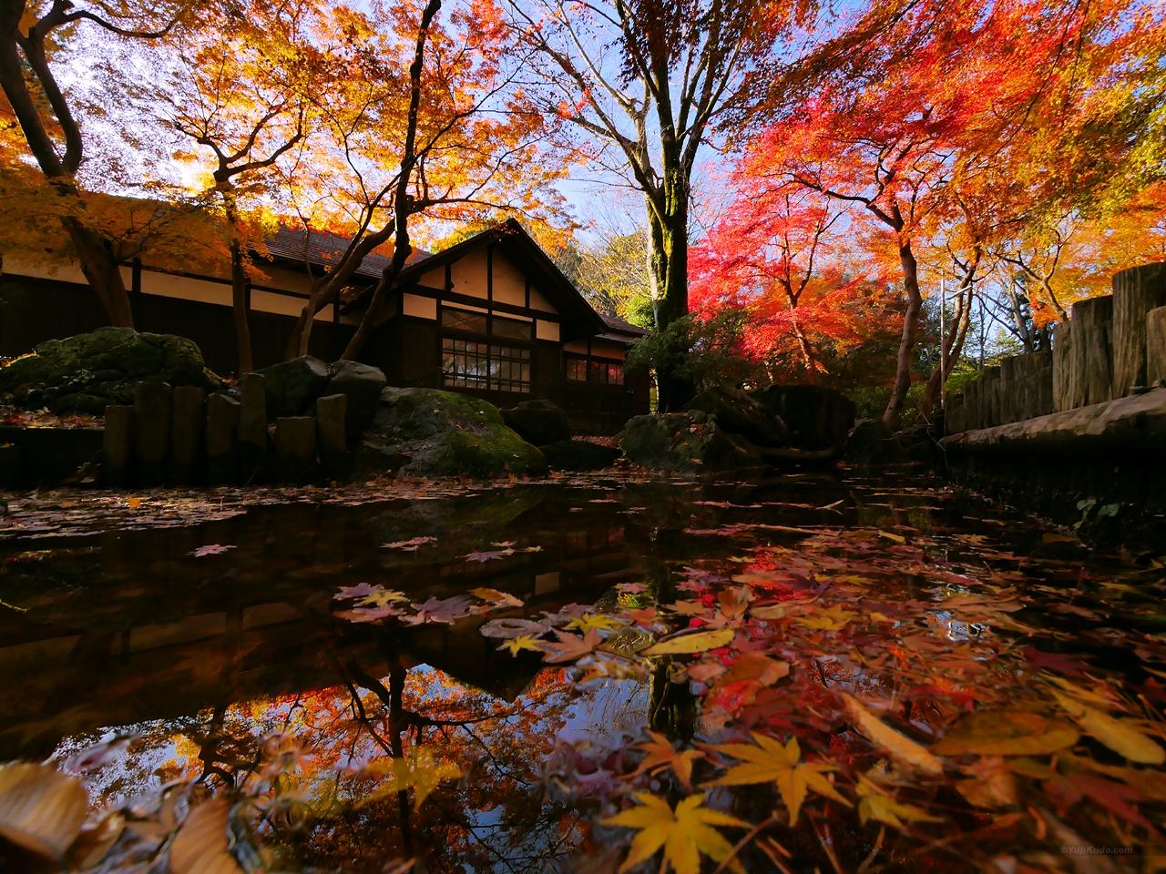 雨上がりの紅葉(浴恩館公園)(むさこくらぶ(2016年11月号(vol.113))今月の表紙)