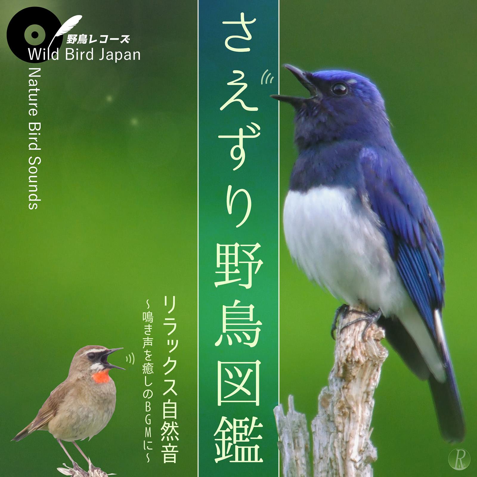 Wild Bird Japan - さえずり野鳥図鑑 リラックス自然音 ~鳴き声を癒しのBGMに~(野鳥レコーズ)