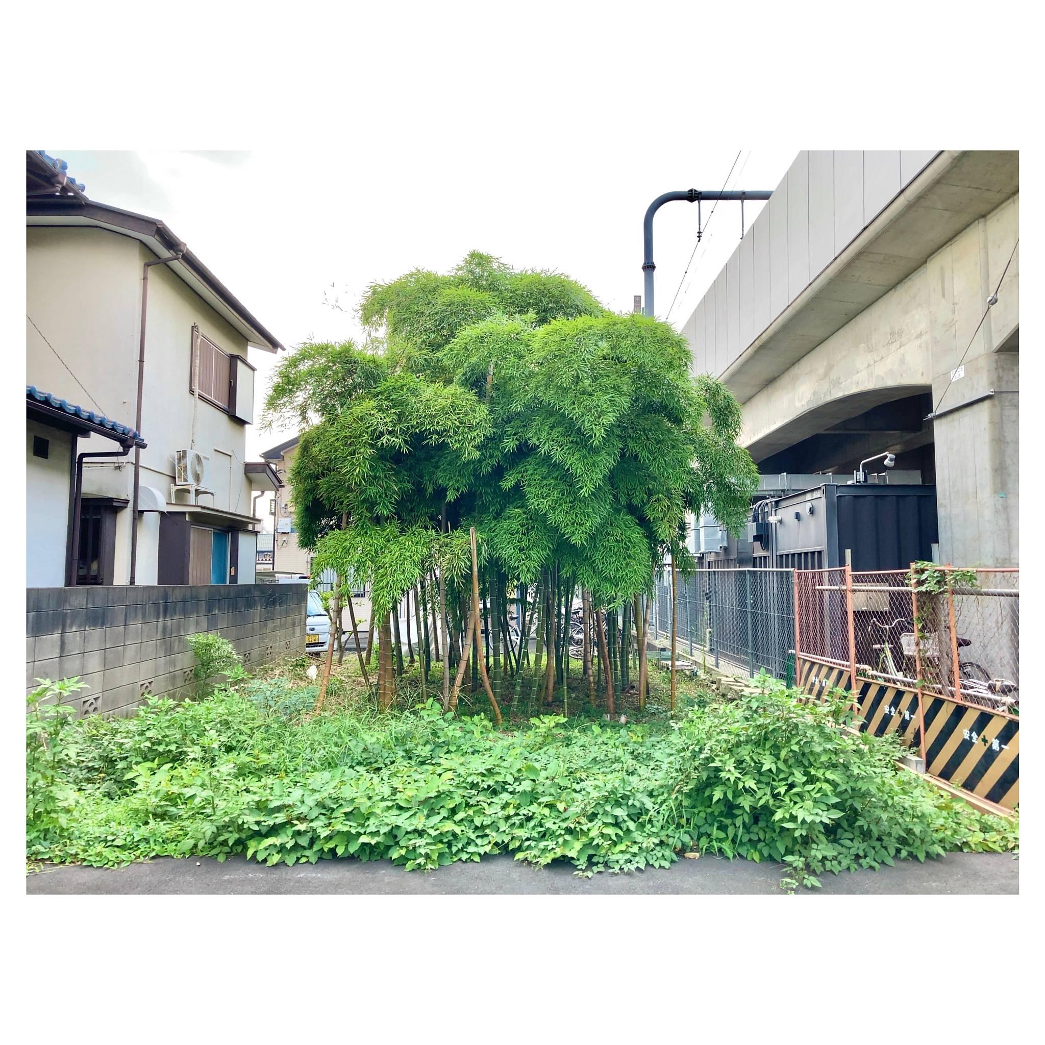高架脇の狭小竹林 東小金井 東京・小金井市